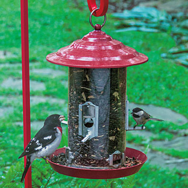Raspberry Red Bird Feeder