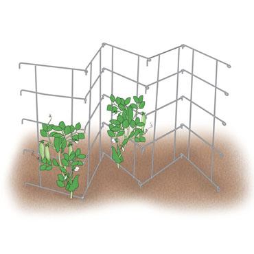 Pea Fence