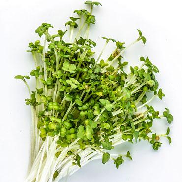 Organic Oriental Wasabi Mustard Microgreen