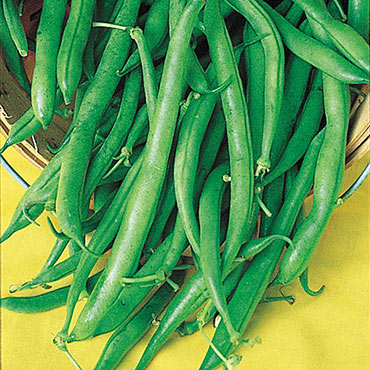 Blue Lake Pole Bean