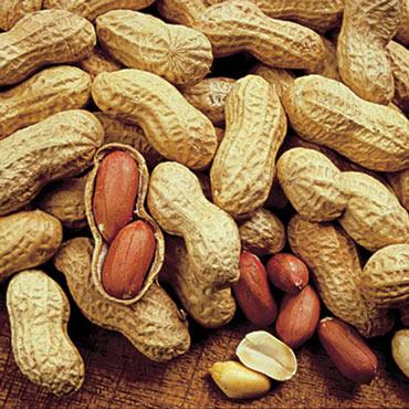 Peanut Champs Jumbo Virginia