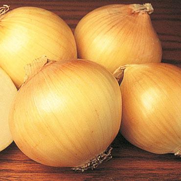 Yellow Sweet Spanish Onion