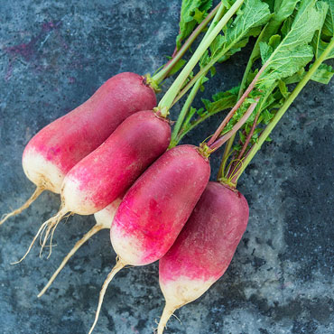 French Breakfast Spring Radish