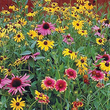 Wildflower Native Perennial Mix