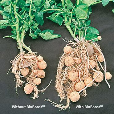 Bio-Boost™ All-Natural Foliar Fertilizer