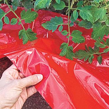 Turbo-Tomato!<sup>&trade;</sup> Mulch