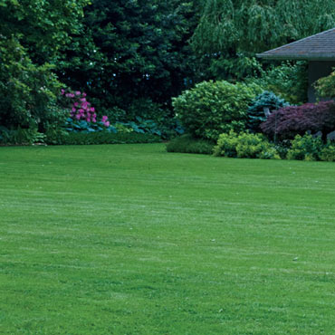 Turf Alive!<sup>®</sup> III with Rhizomes Lawn Mat