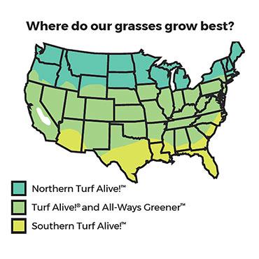 Turf Alive!<sup>®</sup> III Grass Seed Mixture