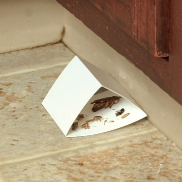 Sure-Catch<sup>™</sup> Cockroach Trap