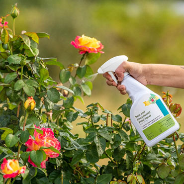 Rose & Ornamental Plant Spray