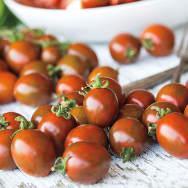 Tomato Chocolate Sprinkles Hybrid