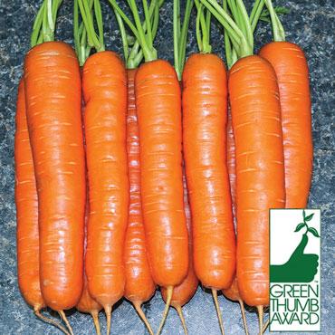 Square Foot Gardening Seed Mat – Organic Yaya Carrot