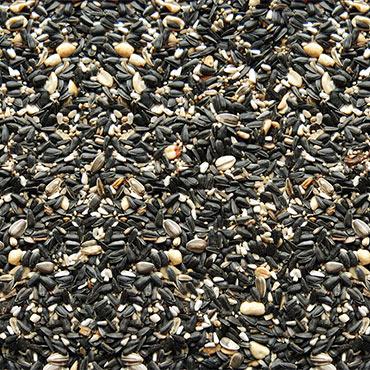 Birds Gone Wild - Wild Bird Seed