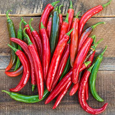Gurney's Salsa Hybrid Hot Pepper