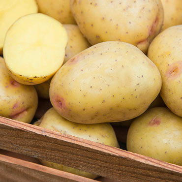 Yukon Gem Potato