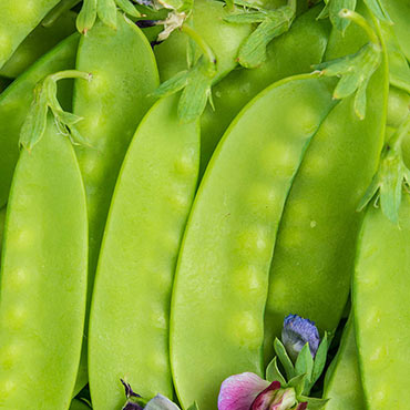 Green Beauty Snow Pea -untreated