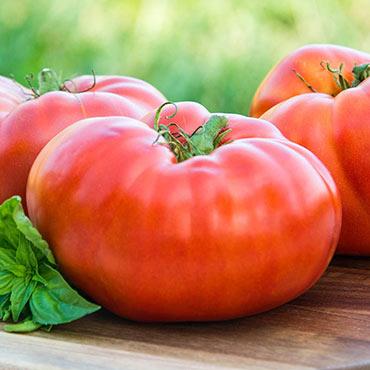 Brandywine Red Tomato
