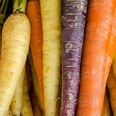 Tricolor Hybrid Carrot
