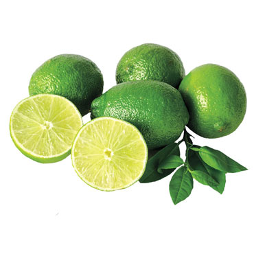Lime Citrus Tree