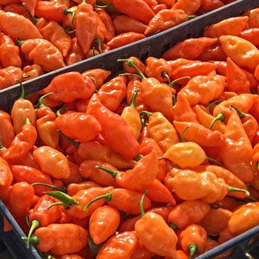 Sweet Pepper Habanada