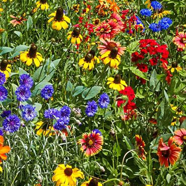 Wildflower Southeast Mix Pkt