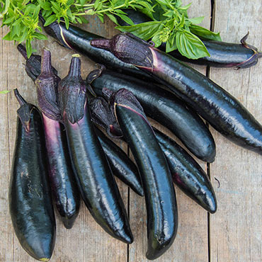 Shikou Hybrid Eggplant
