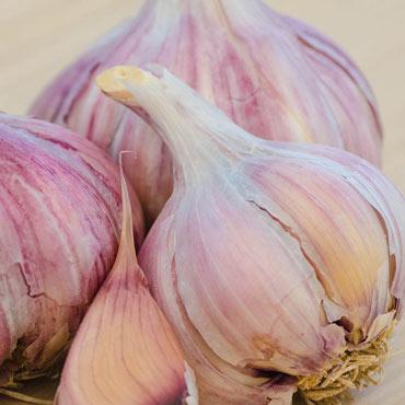 Glazer Purple Garlic