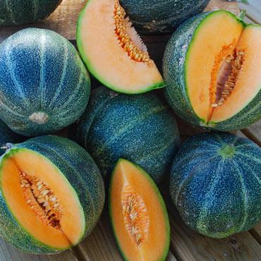 Melon Petit Gris De Rennes Pkt