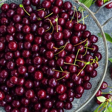 Juliet™ Dwarf Cherry