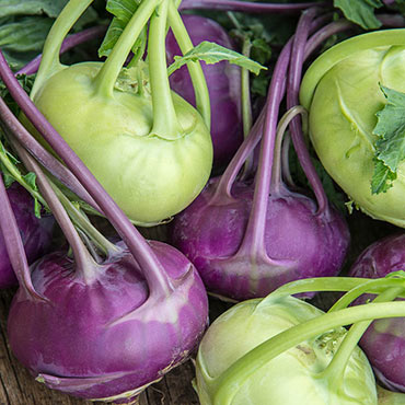 Sweetie Hybrid Mix Kohlrabi