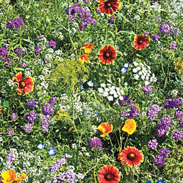 Gurney's<sup>®</sup> Beneficial Bug Wildflower Mix