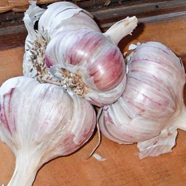 Inchelium Red Softneck Garlic