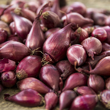 Red Onion Set