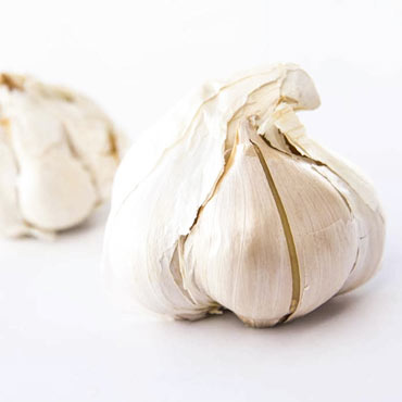 Elephant Hardneck Garlic