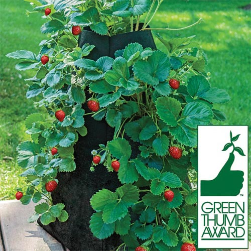 1836 Strawberry Pyramid Grow Tub™  3.5 gal 12quot; x 12quot; base x 20q