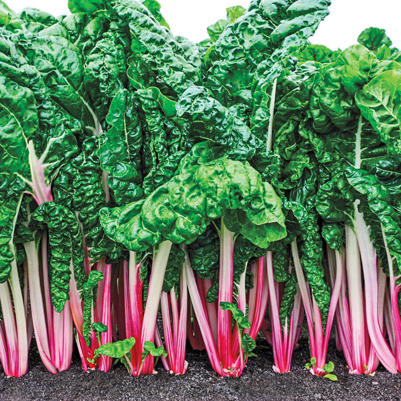 Peppermint Swiss Chard Gardens Alive