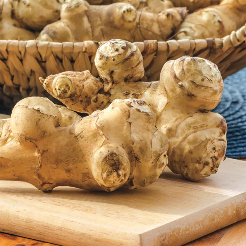 Jerusalem Artichoke Tubers For Sale At Gardens Alive