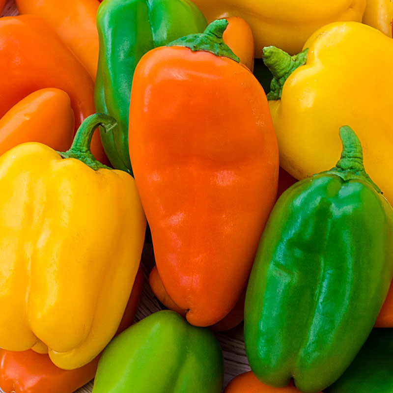 ALL COLORS!! GREAT MIX!!! Mixed Bell Pepper Seeds FREE SHIPPING!!