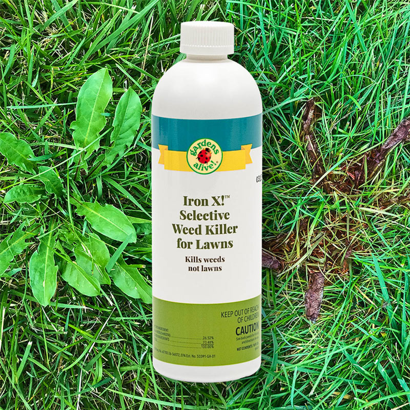 3721A - How To Get Rid Of Corn Speedwell In Lawn