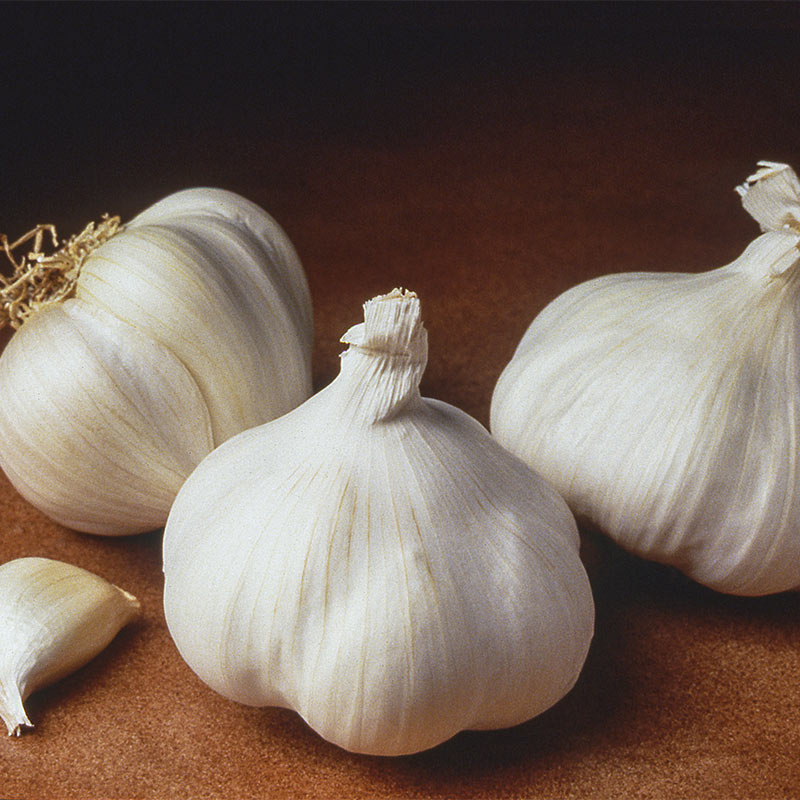 Planting or Eating 6 Bulbs Garlic Bulb California Softneck