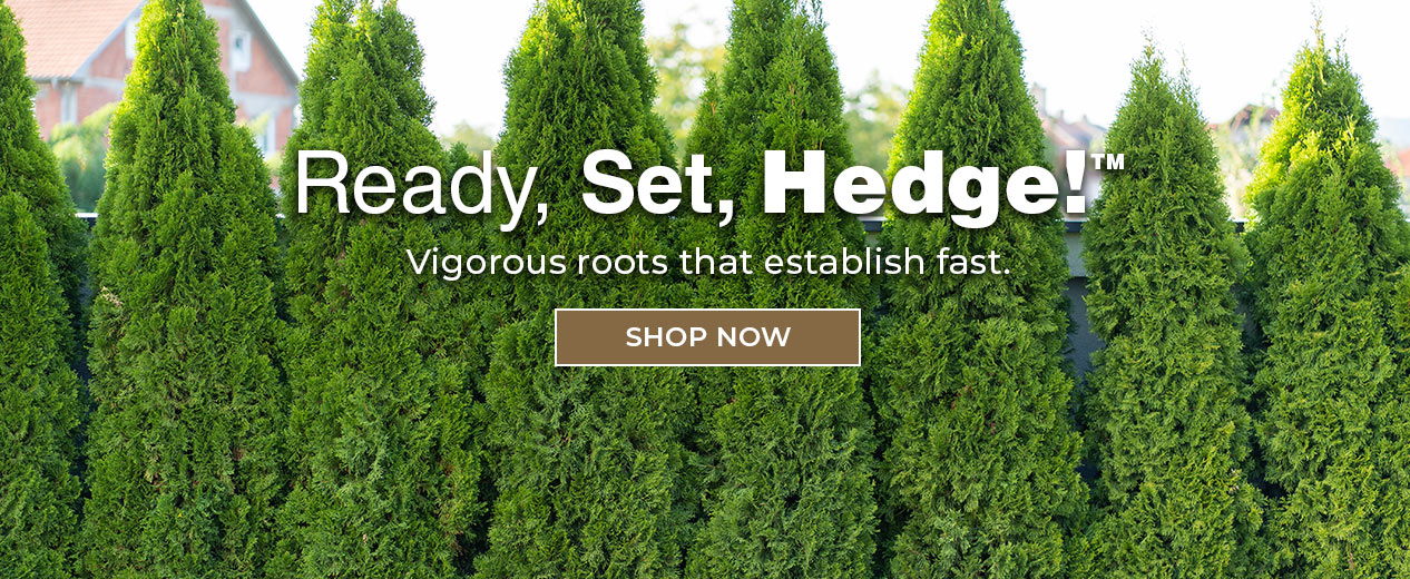 Hedges and Shrubs