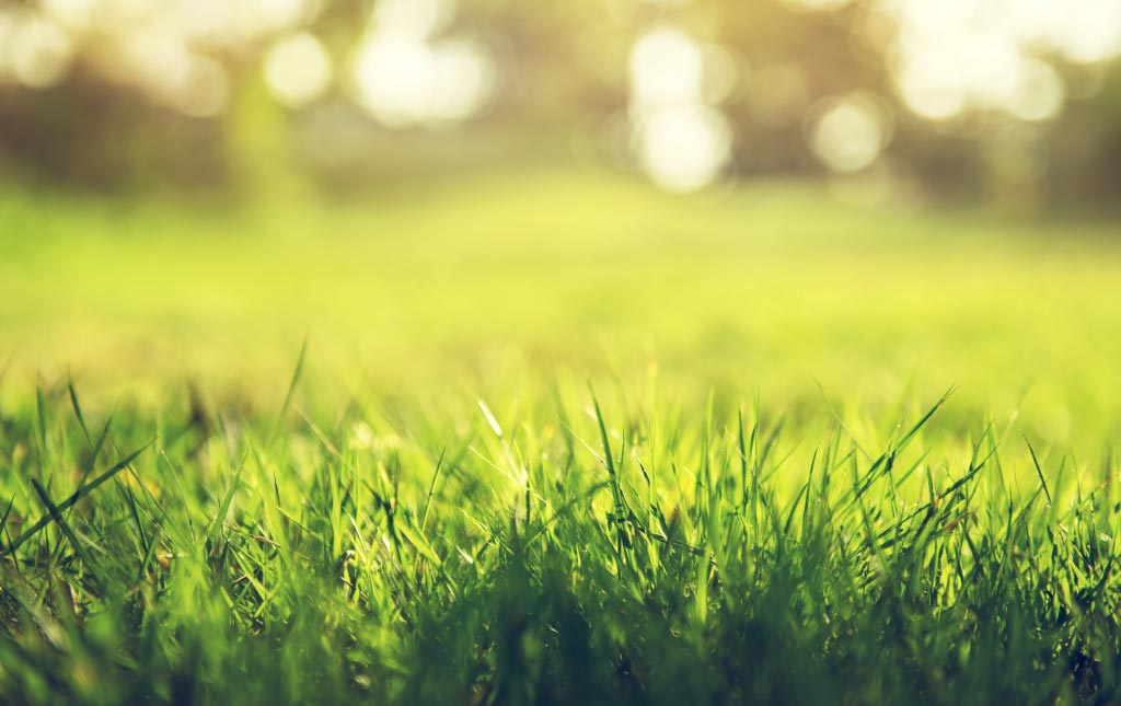 go green for a lush lawn Take back your lawn the all-natural way! Shop Lawn  Care - Gardens Alive - Organic Gardening, Lawn Care, And Natural Pest Solutions