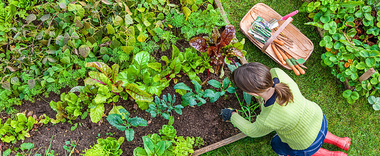 Gardens Alive Organic Gardening Lawn Care And Natural Pest Solutions