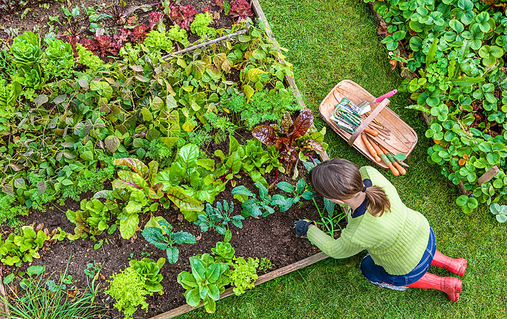 The 5 Fundamentals of Garden Supplies People Get Wrong