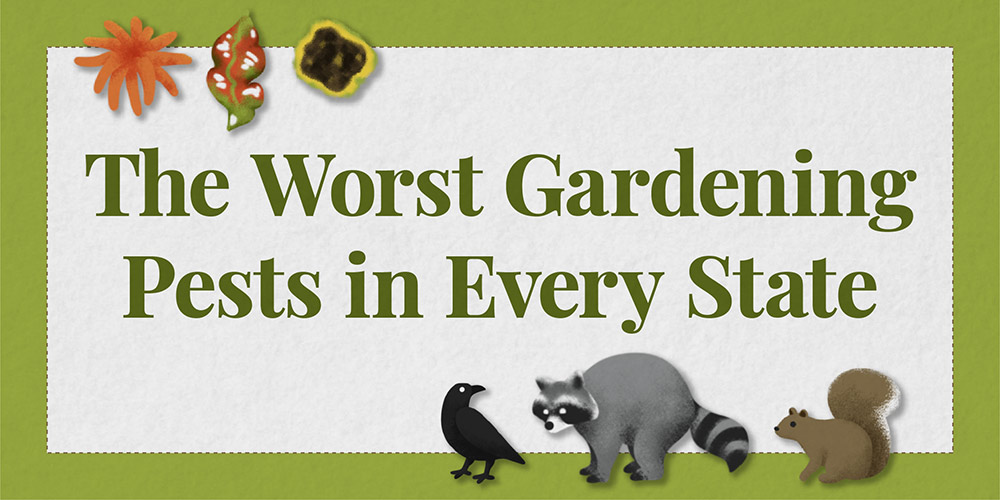 title graphic for the worst gardening pests report