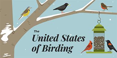The United States of Birding