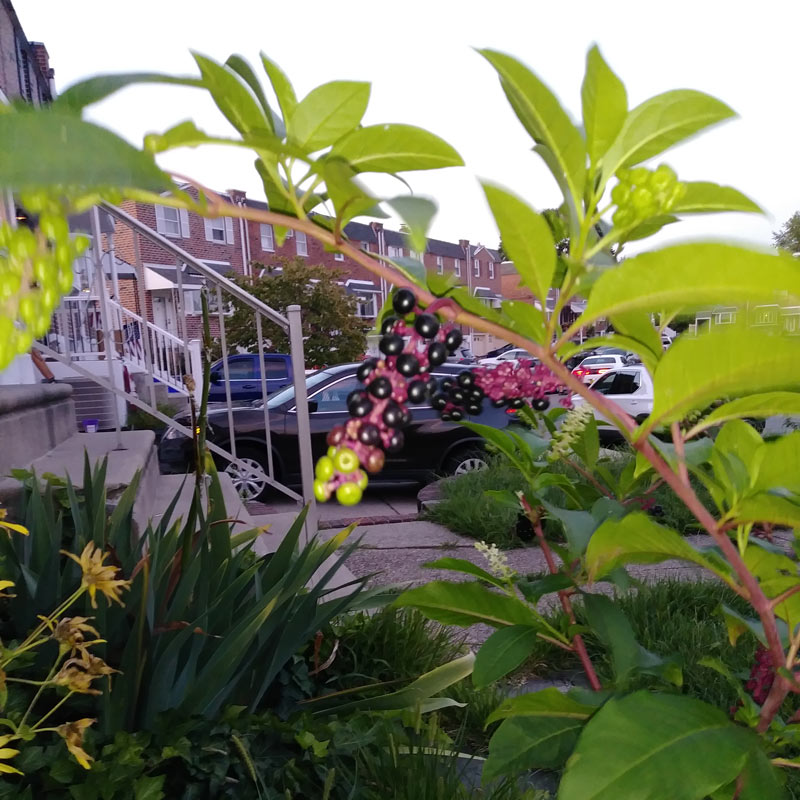 YBYG Plant Photo 1