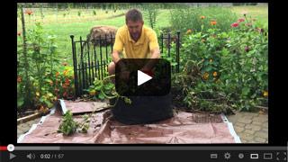 Kennebec Potato Grow Tub Harvest
