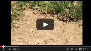 Gardener's Gold Compost