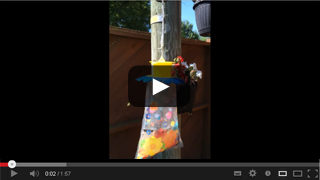 Fly Trap Video